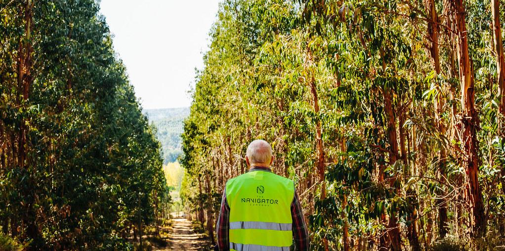 Valorizar terreno florestal