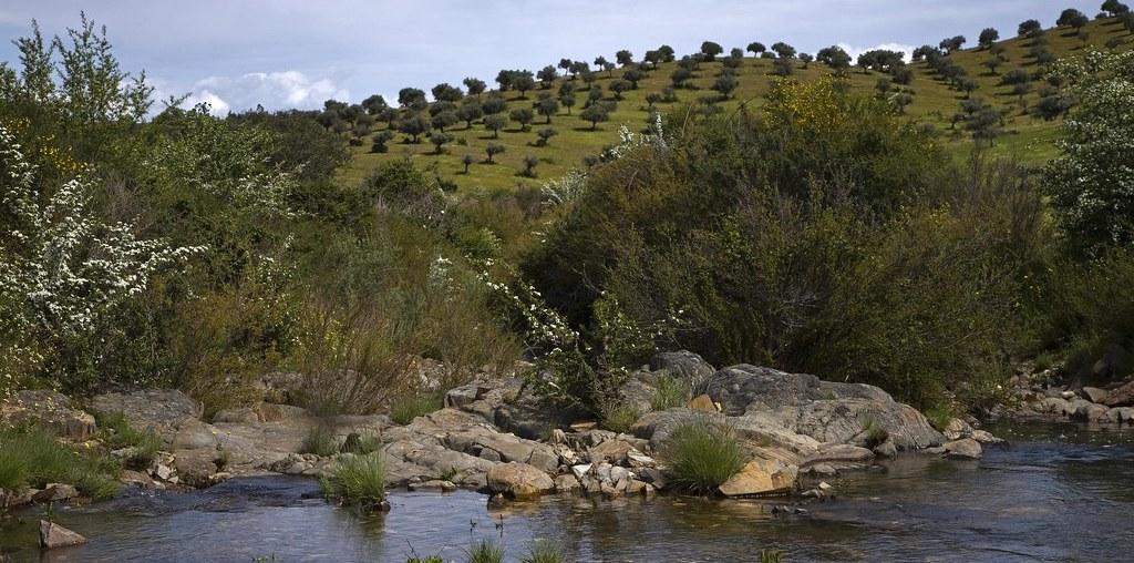 árvores mais pequenas à beira de um riacho