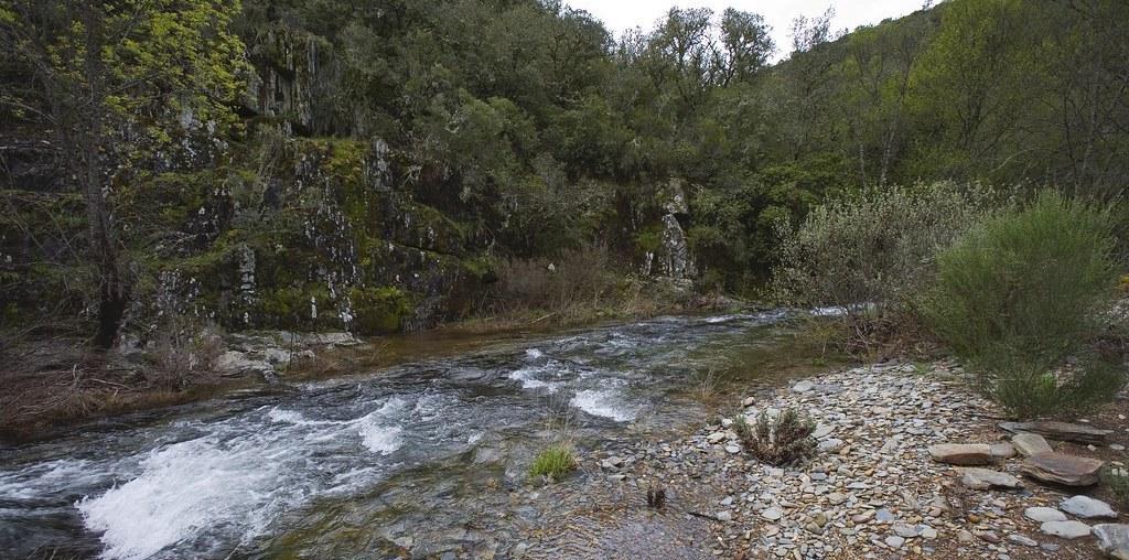 riacho na Floresta