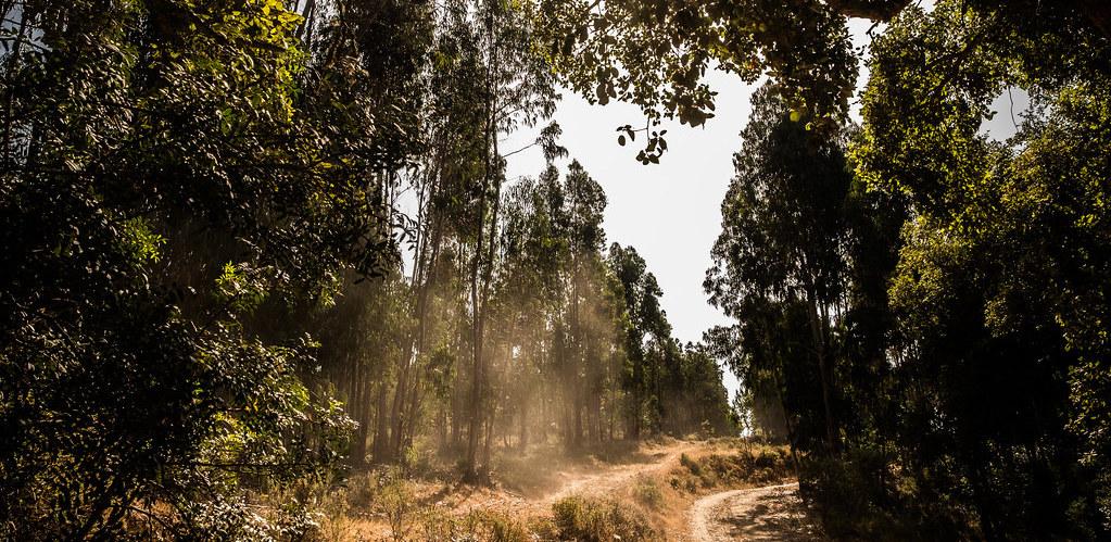 floresta-iberica