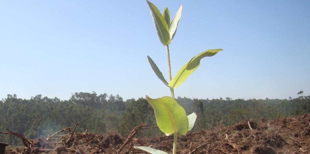 plantação em solo fertil