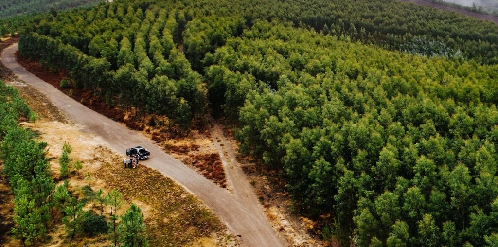 Floresta arrendada pela Navigator