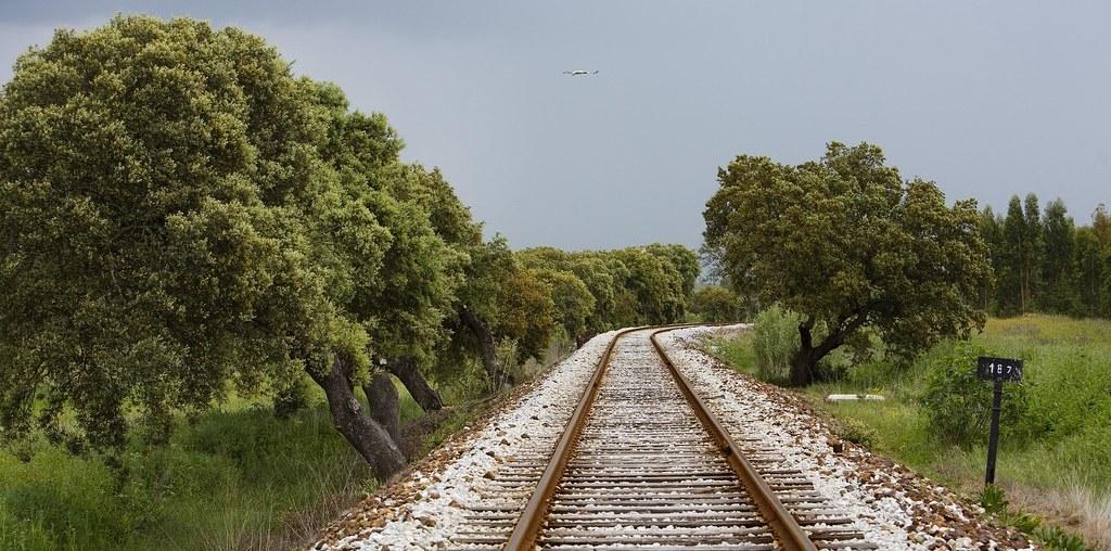 florestas num caminho férreo