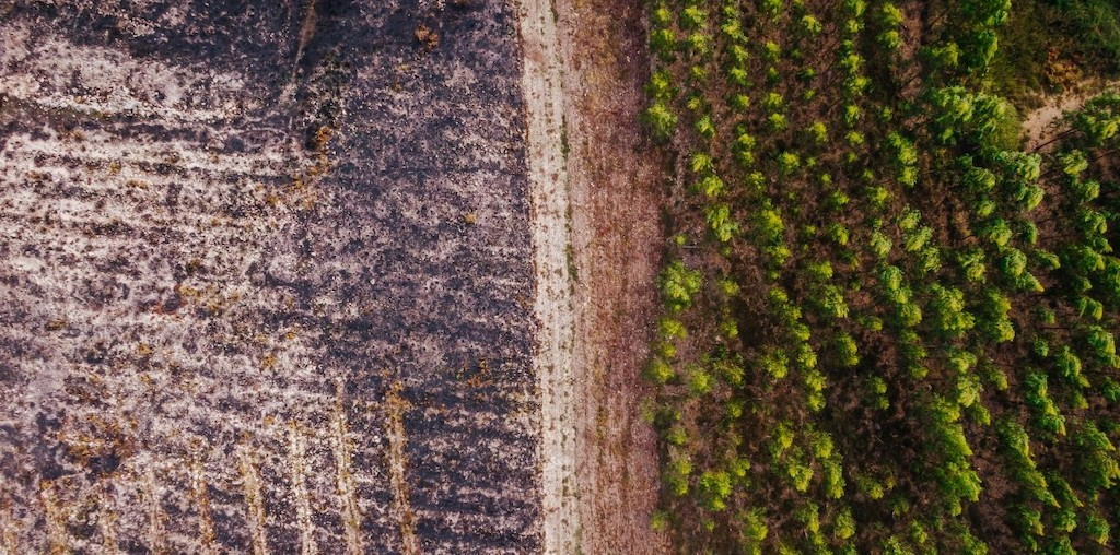 area de floresta depois de fogo e area sem verde