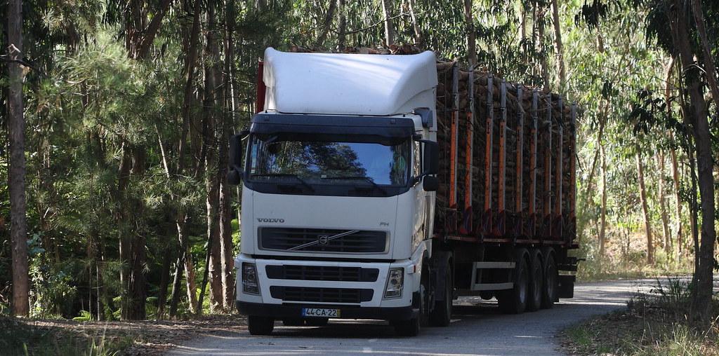 camião na floresta