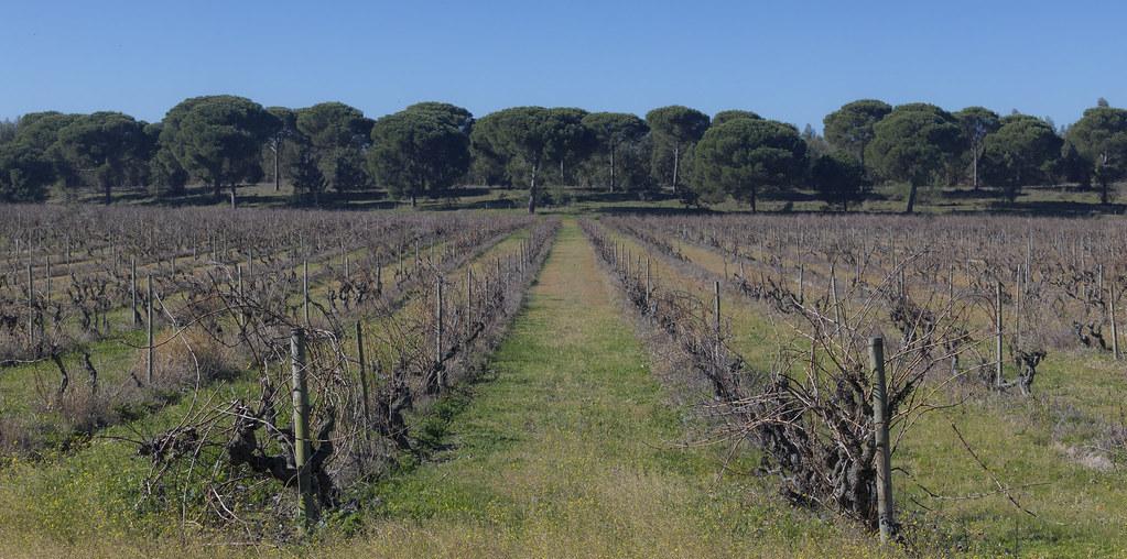 vina e olival na floresta
