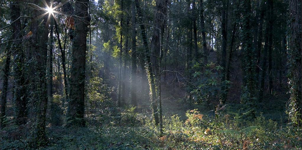 Floresta ardida