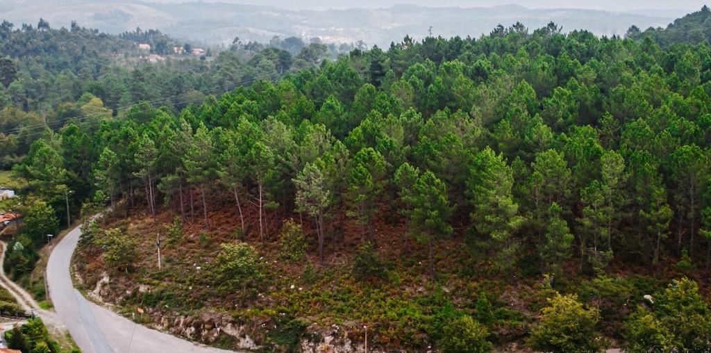 floresta em desenvolvimento