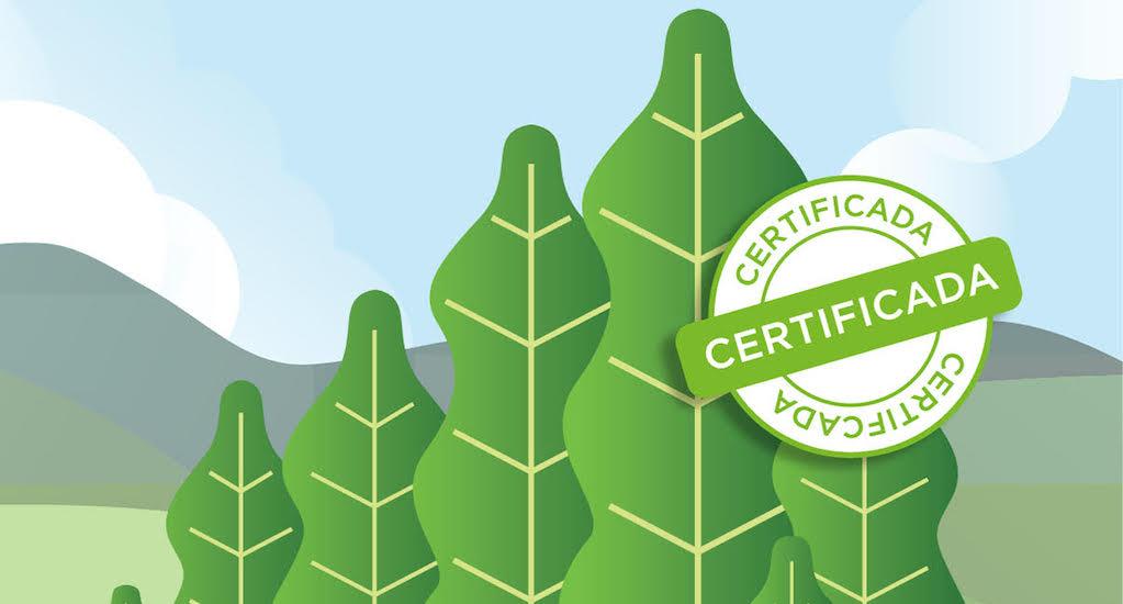ilustração certificação