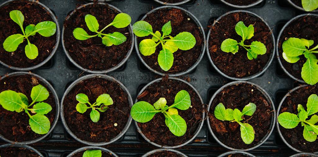 Plantas resistentes a crescer