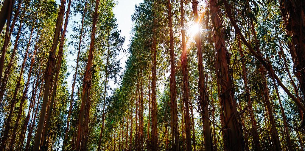 residuos florestais
