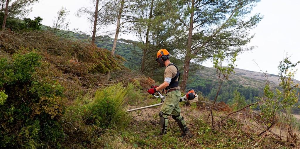 homem a fazer limpeza florestal