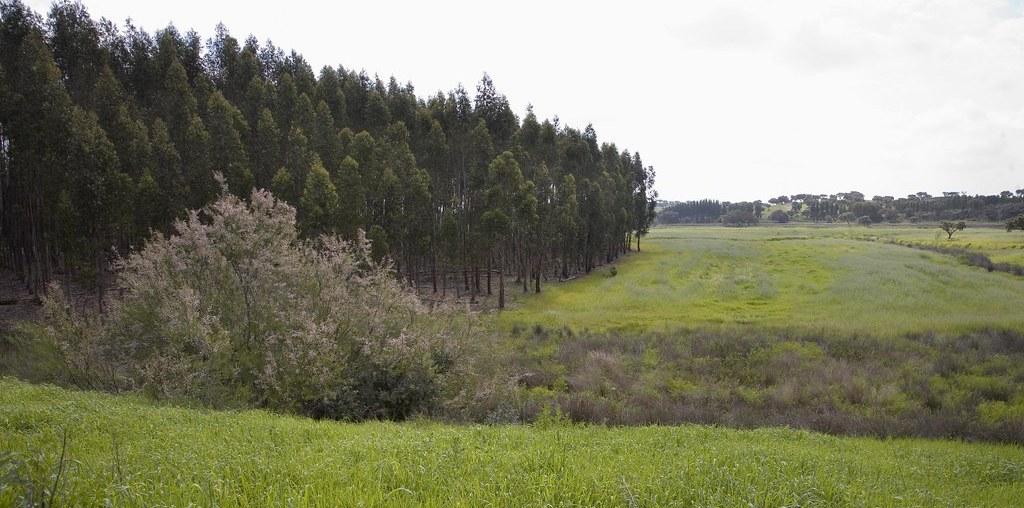 paisagem de floresta e campo verde