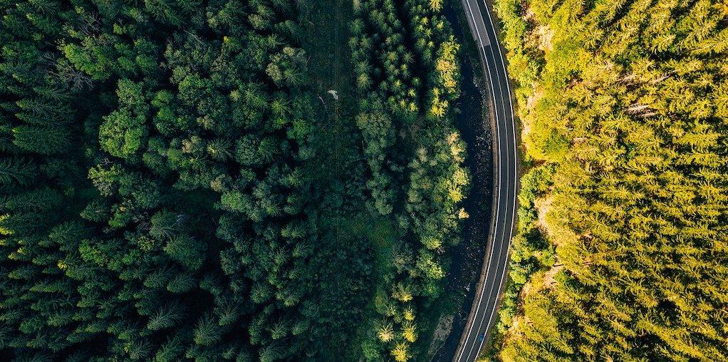 estrada no meio de floresta