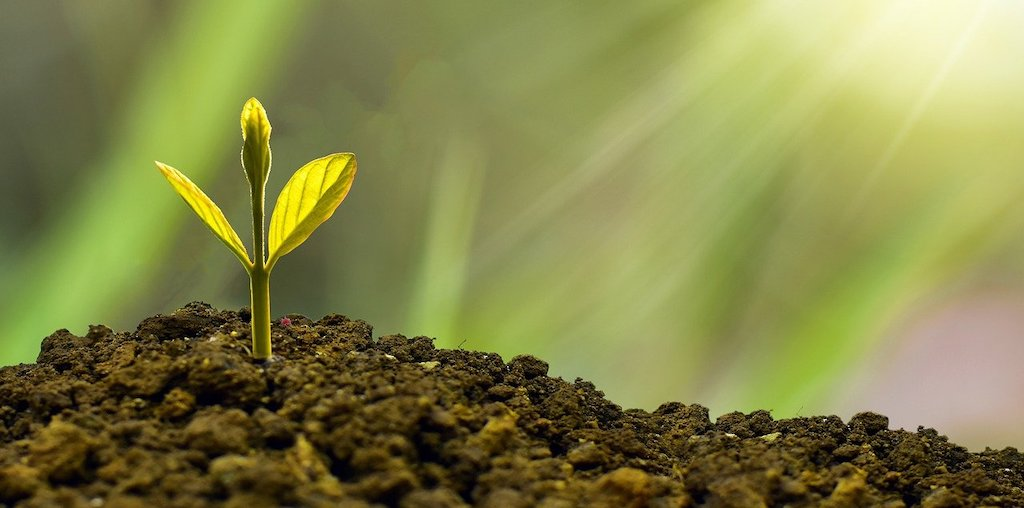 planta a crescer no solo