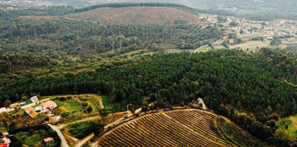 Imagem de Drone da Floresta do Minho