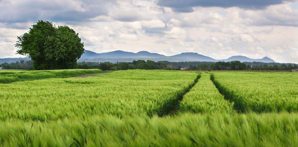 campo agrícola