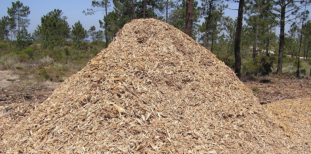 biomassa triturada