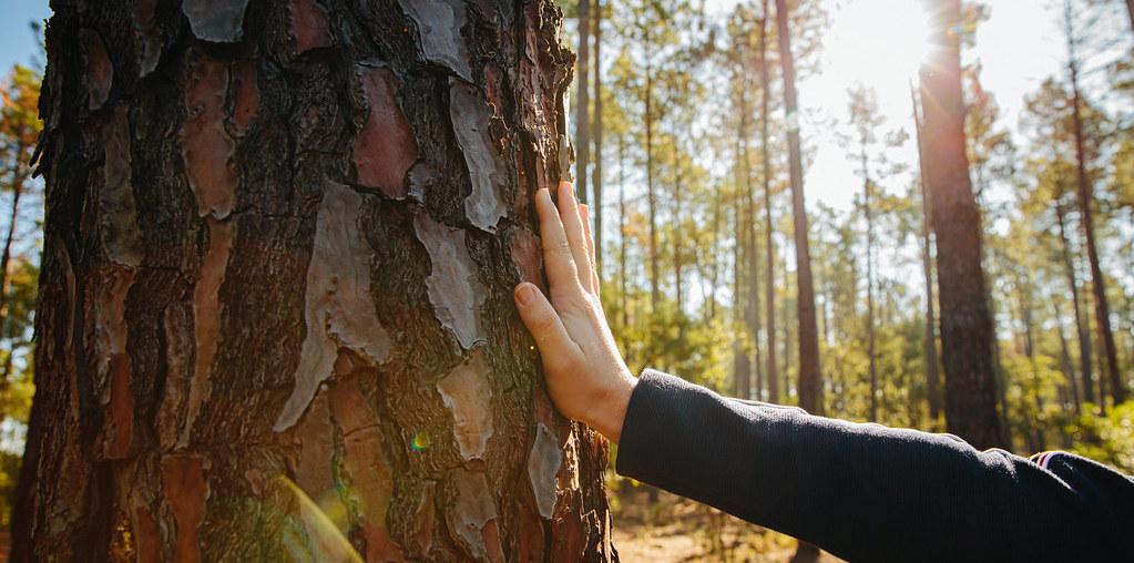 Mão na árvore