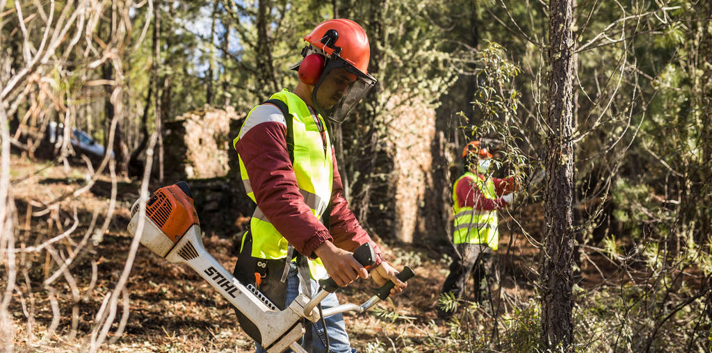 dois homens a limpar a floresta