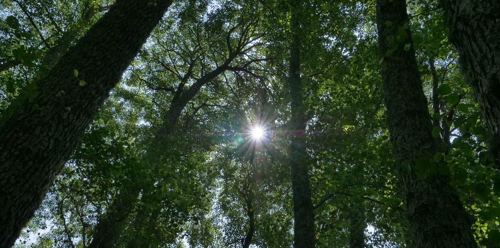 Floresta autoctone com raio de sol