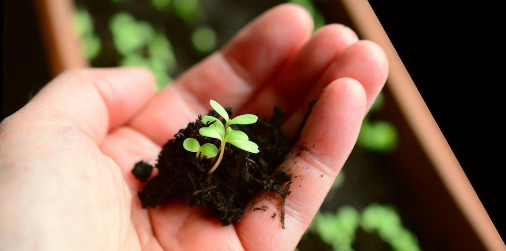 planta jovem a nascer