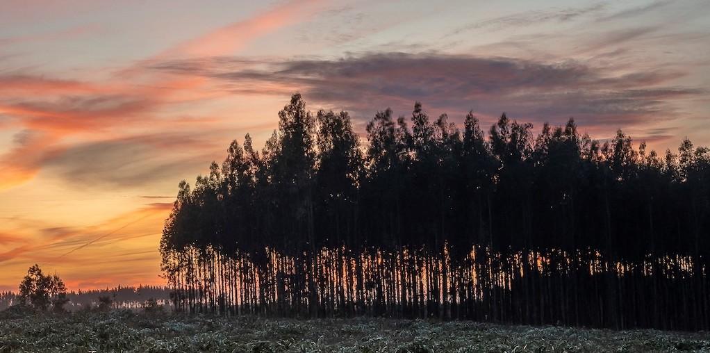 floresta ao por do sol