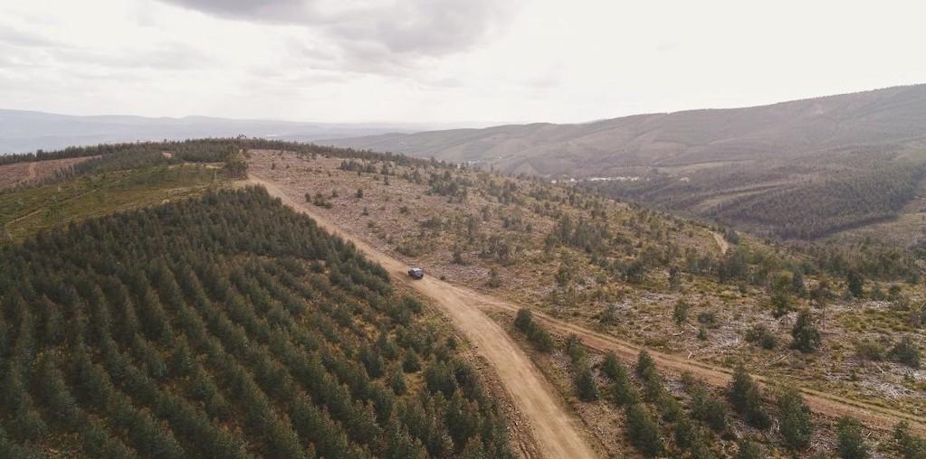 floresta portuguesa com estrada de terra batida