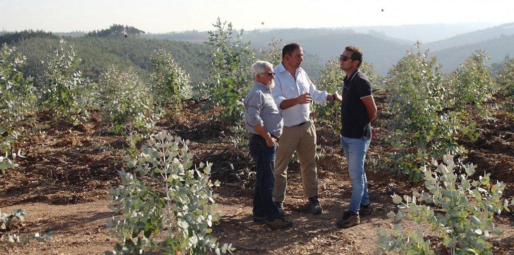 3 homens a conversar na floresta