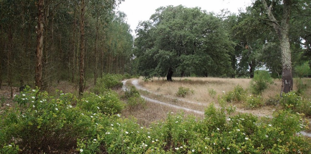 floresta com estrada de terra batida