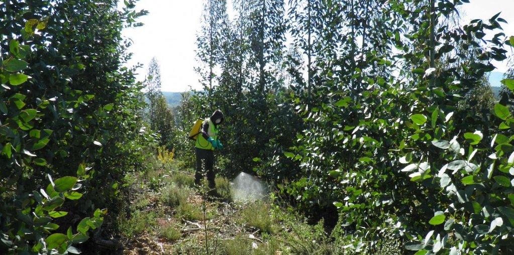 aplicação de herbicida na floresta