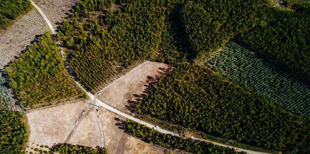 vista aérea de zona florestal cadastrada
