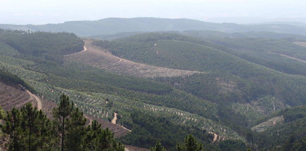 paisagem de floresta com gestão