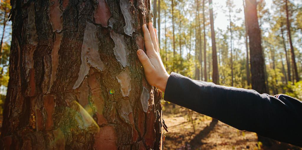 mão a tocar num pinheiro