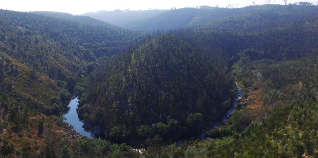vista aérea floresta