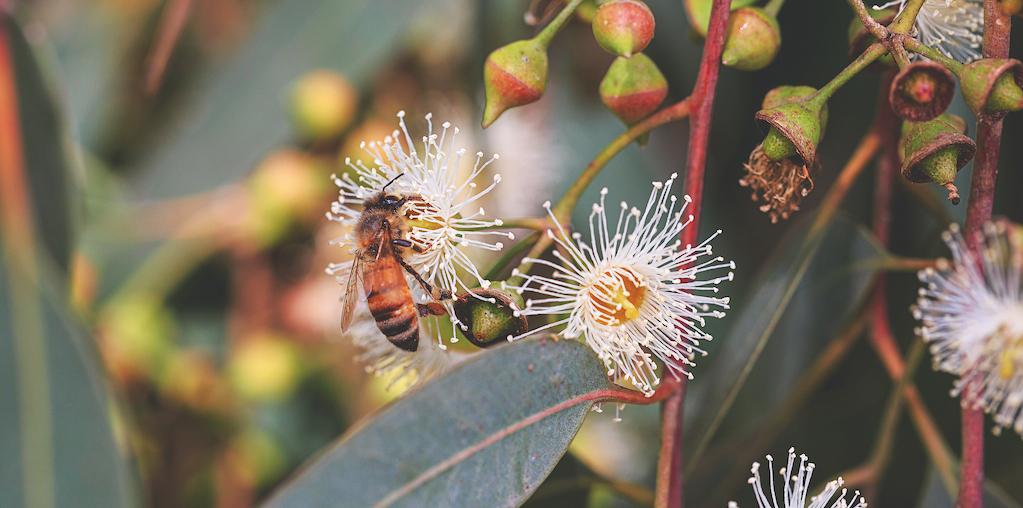 abelha a polinizar